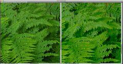 Sony A7r vs Fuji X-T10 1m wide print crop