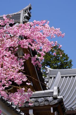 Minoh Spring