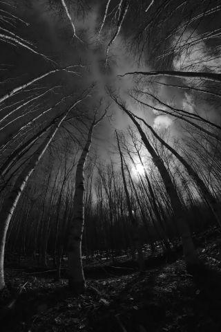 The Elven Wood